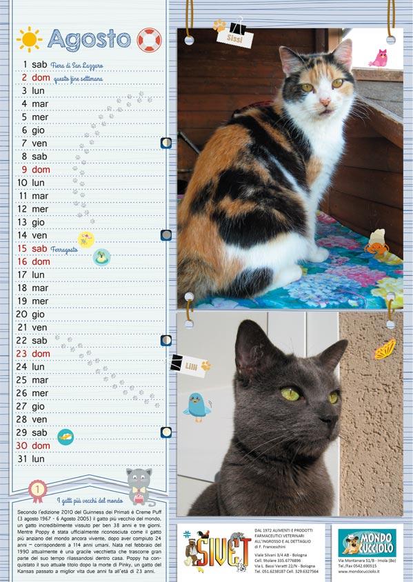 calendario, calendar, agosto, august