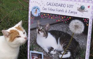 calendario; calendario a muro; calendario da parete; calendar; gatti; cats; ong; onlus; cri graphics